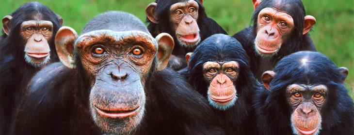 monkey_world_top.jpg
